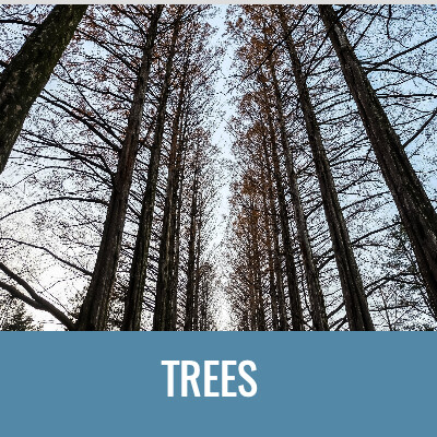 TREES Word Search- Doug Gazlay- DougPuzzles.com